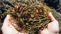 Tradecorp lanzará Phylgreen, un extracto único de algas, en la Naivasha Horticultural Fair en Kenia