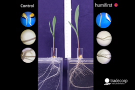 Desarrollo de raíces con Humifirst / Humistar (video timelapse)