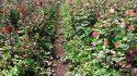 Una historia de éxito con rosas: Productos de alta eficiencia y servicio técnico personalizado