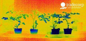 Detección del estrés con imágenes térmicas