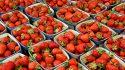 Ensayo en fresas
